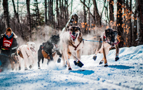 35th John Beargrease Sled Dog Marathon