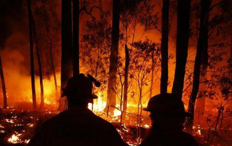 Update on Australian Fires