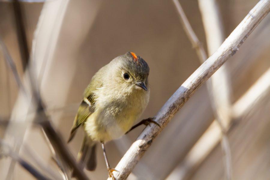 Slideshow: Birds of Minnesota