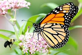 Protecting Monarch Butterflies